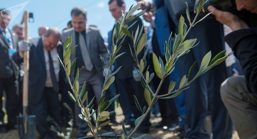 Jałta, sadzenie alei drzew na znak syryjsko-rosyjskiej przyjaźni