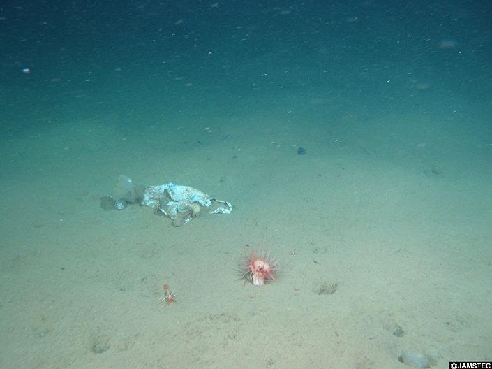Plastikowa siatka znaleziona na dnie Rowu Mariańskiego