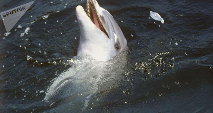 Delfin na wybrzeżu Morza Czarnego