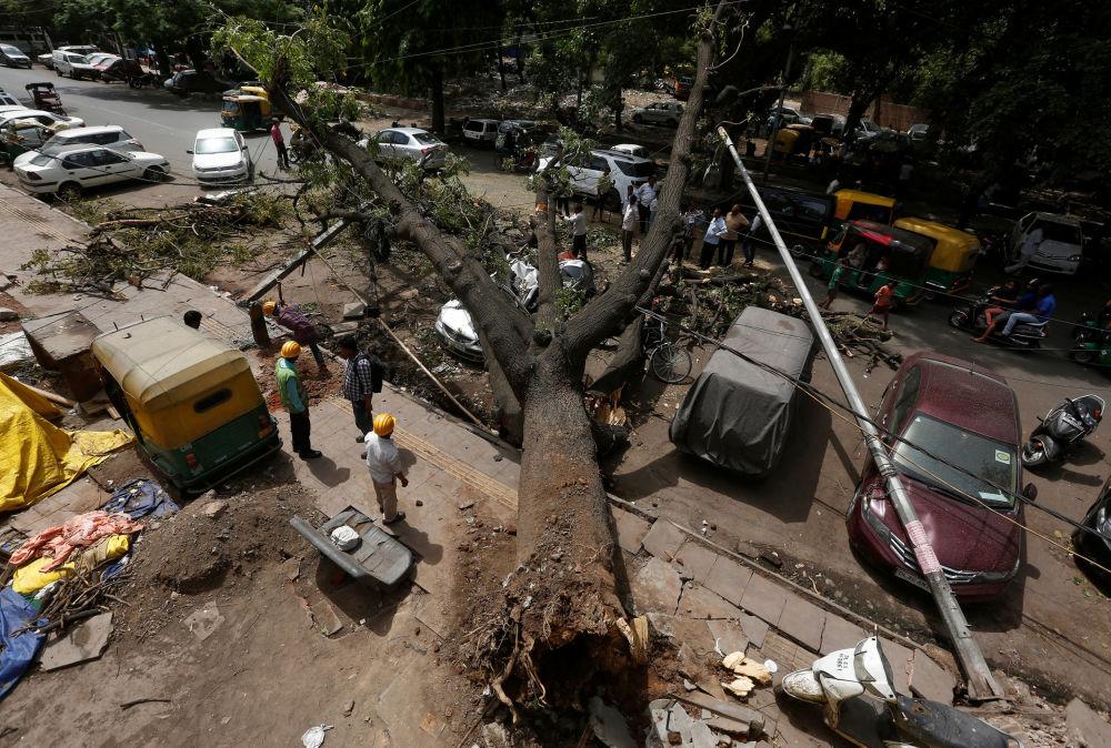 Robotnicy ścinają gałęzie wykarczowanego drzewa po burzy w New Delhi w Indiach