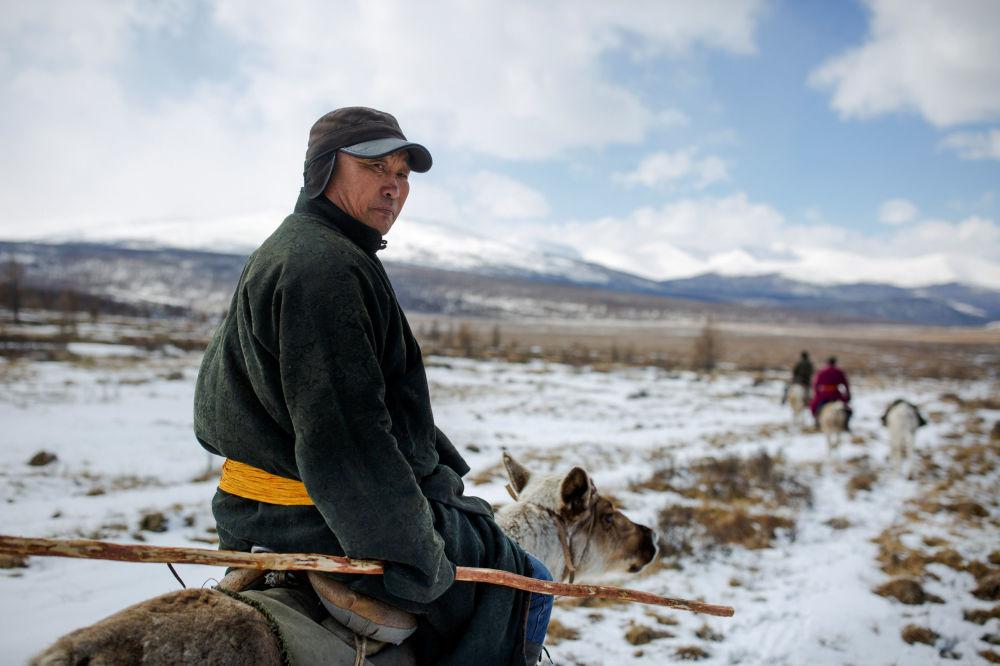 Miejscowy lekarz Davaavav Njamaa jedzie zaprzęgiem reniferów, by odwiedzić koczowników w lesie niedaleko wsi Cagaannuur, Huvsgel, Mongolia
