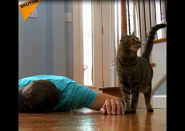 Jak reagują na śmierć właściciela kot i pies?