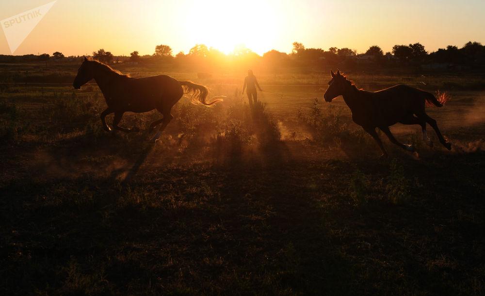 Konie w centrum konnym, zajmującym się odrodzeniem rasy dońskiej w obwodzie rostowskim