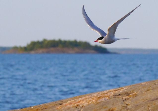 Morze Archipelagowe, Bałtyk