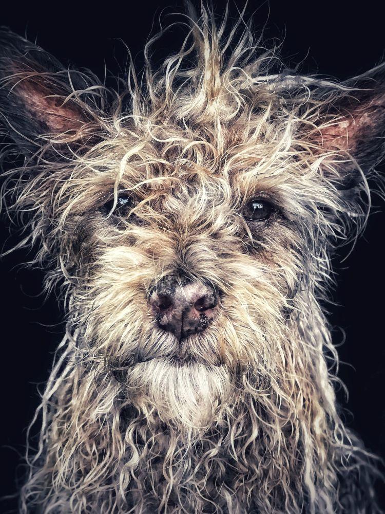 Fotograf Robin Robertis zajął pierwsze miejsce w nominacji zwierzęta w konkursie fotograficznym iPhone Photography Awards 2018