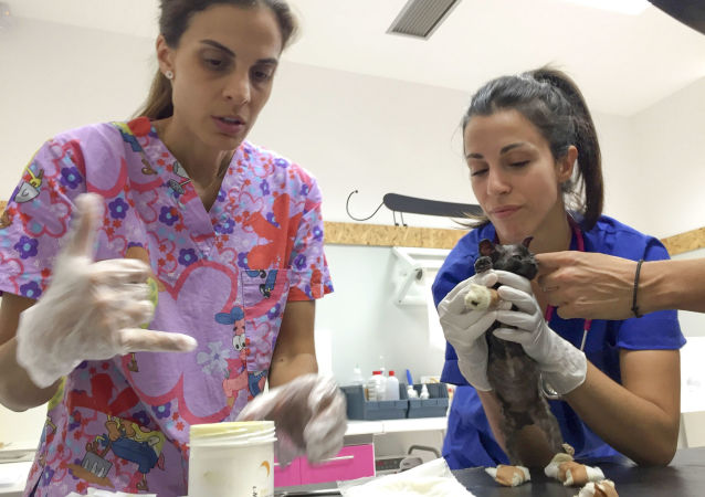 Od wybuchu pożarów w Grecji weterynarze wolontariusze leczą w swoich klinikach i na miejscu tragedii zwierzęta