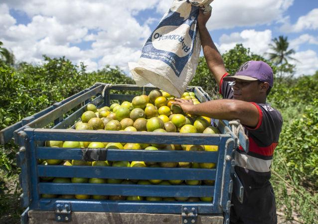 Zbiór plonów w Brazylii
