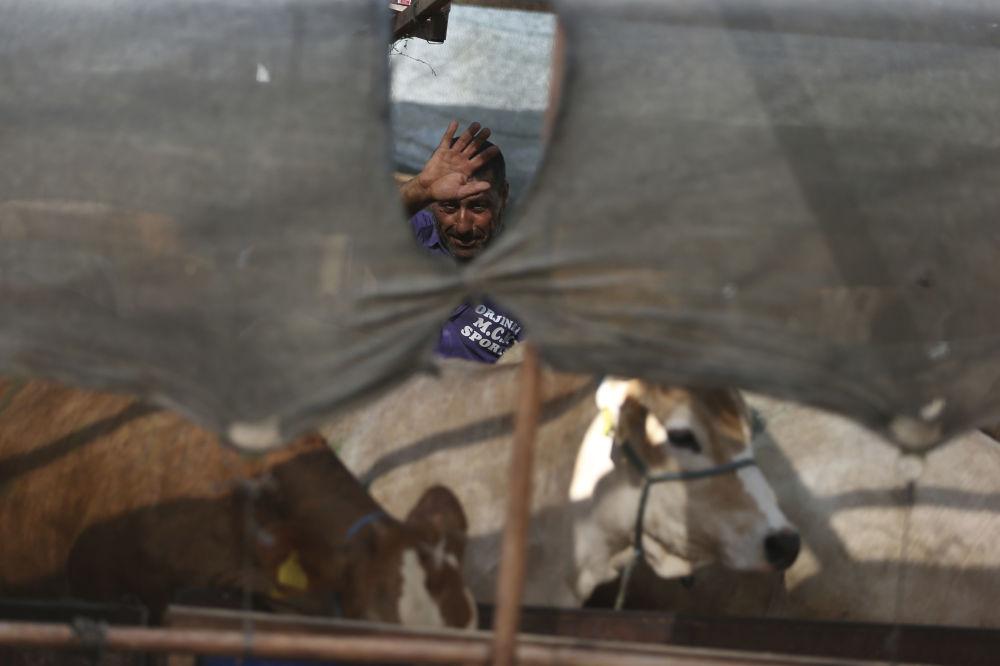 Mężczyzna sprzedaje zwierząt ofiarnych w Turcji