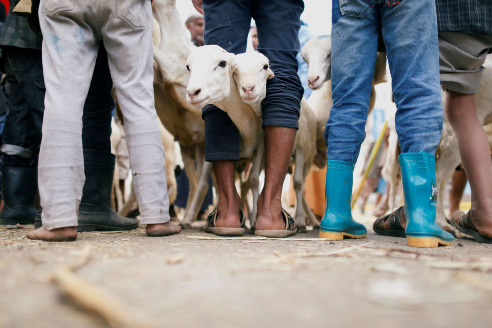 Sprzedarz zwierząt ofiarnych. Sana, Jemen