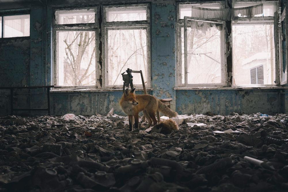 Finalista konkursu Wildlife Photographer of the Year 2018