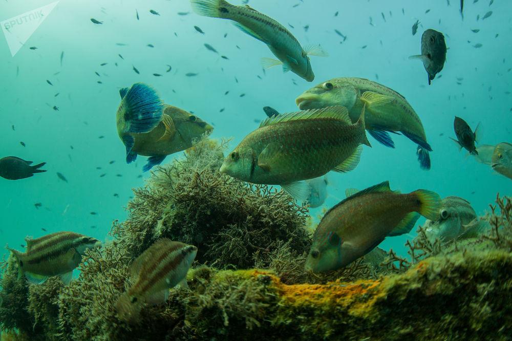 Podwodny świat Krymu