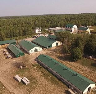 Rolnicy z Południowej Afryki chcą zamieszkać w Rosji