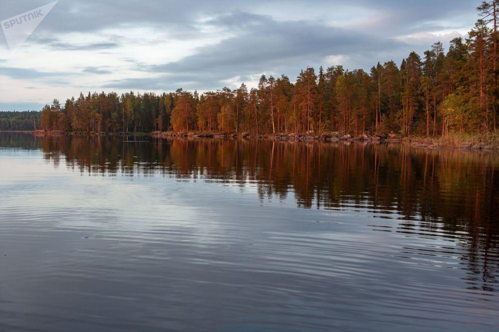 Jeziora leśne w rejonie suojarwskim w Karelii
