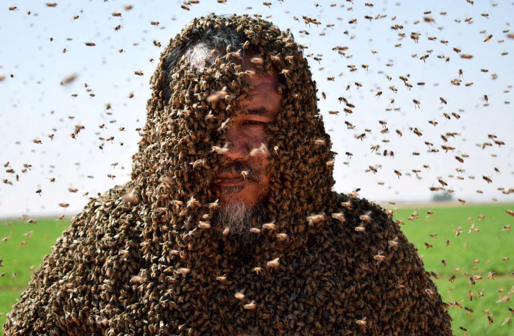 Człowiek całkowicie pokryty pszczołami, Arabia Saudyjska