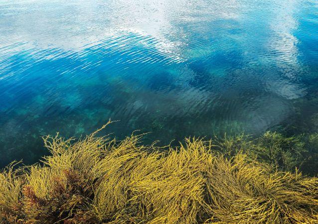 Peczengskij zalew przy półwyspie niemieckim w obwodzie murmańskim
