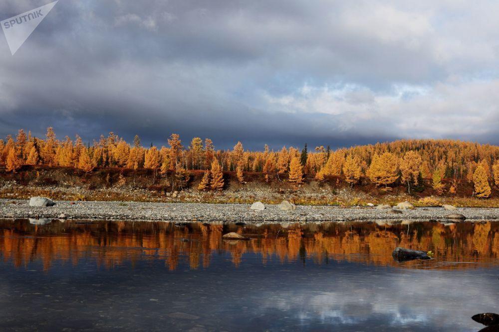 Ural polarny