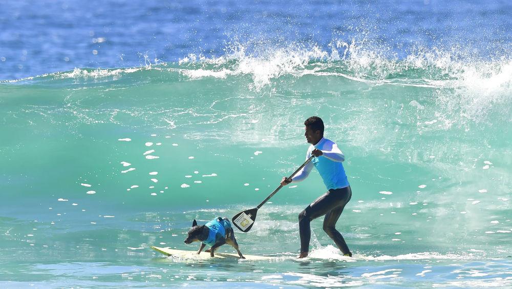 Surfingowe psie zawody w Kalifornii