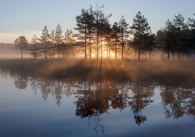 Słońce świeci przez drzewa wczesnym porankiem w Republice Karelii