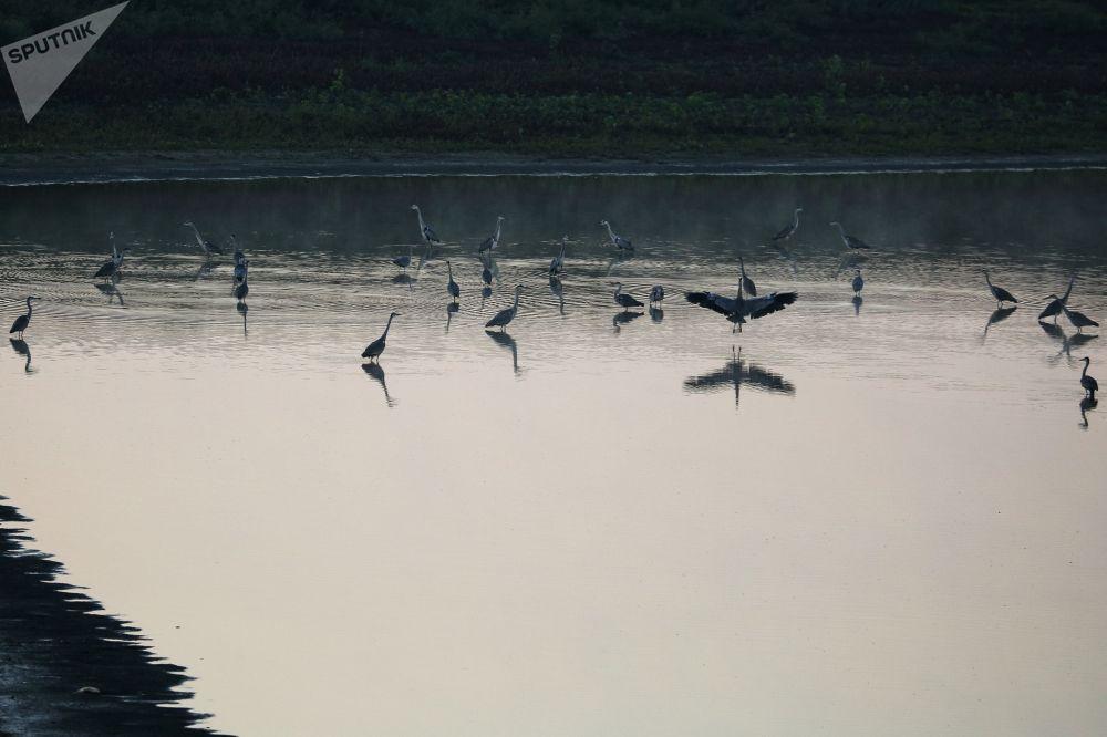 Czaple na rzece w Republice Adygei