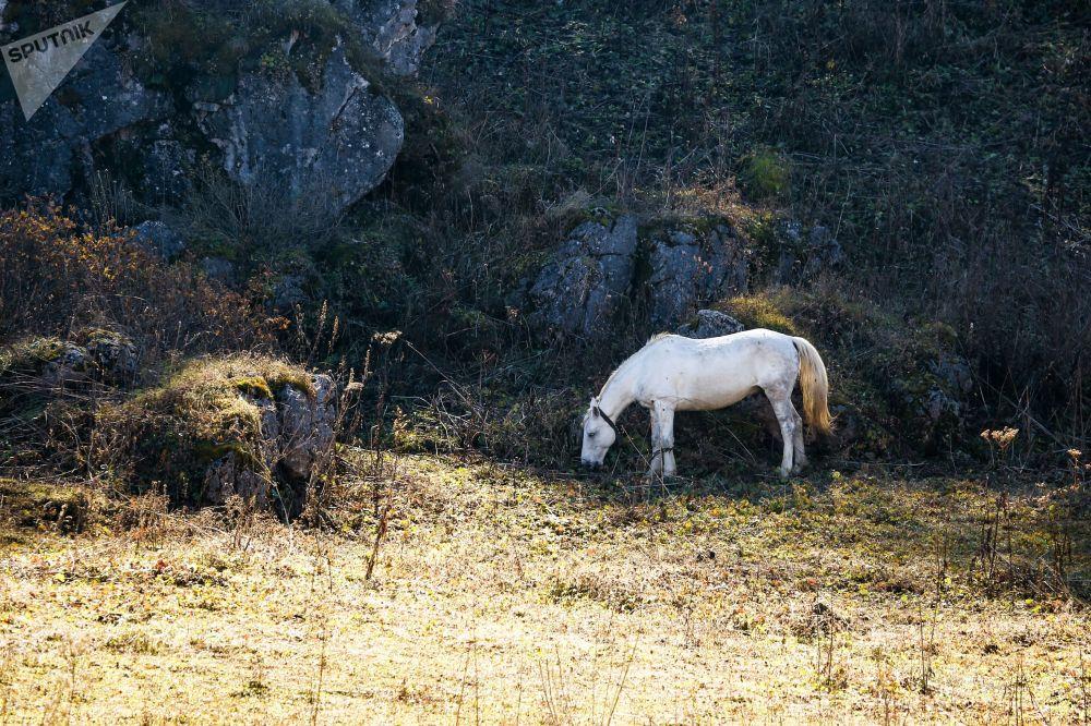 Koń na przyrodzie w Republice Adygei