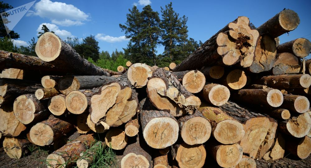Drewno w obwodzie nowosybirskim