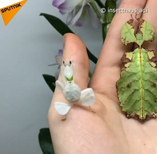 Rośliny z łapkami