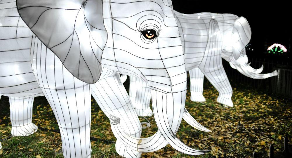Instalacja ze słoniem w Paryżu