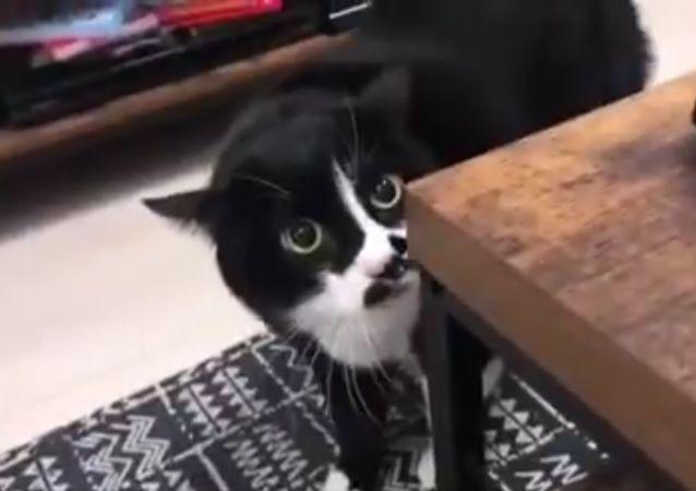 Kot, który koncertuje po gruzińsku