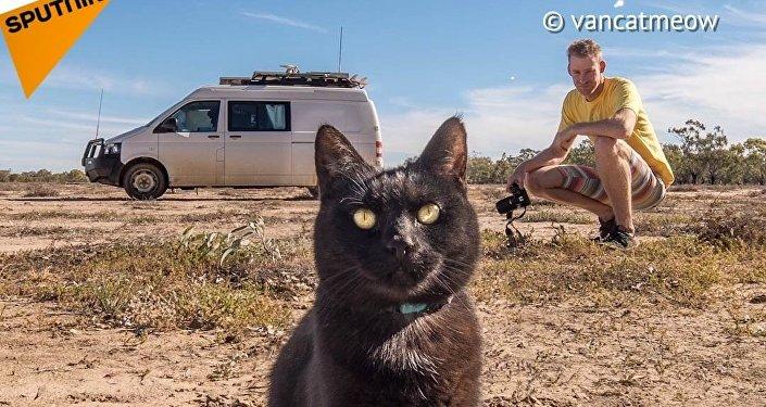 Kotka, która uwielbia podróże