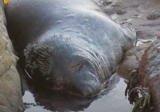 Turyści kaleczą foki