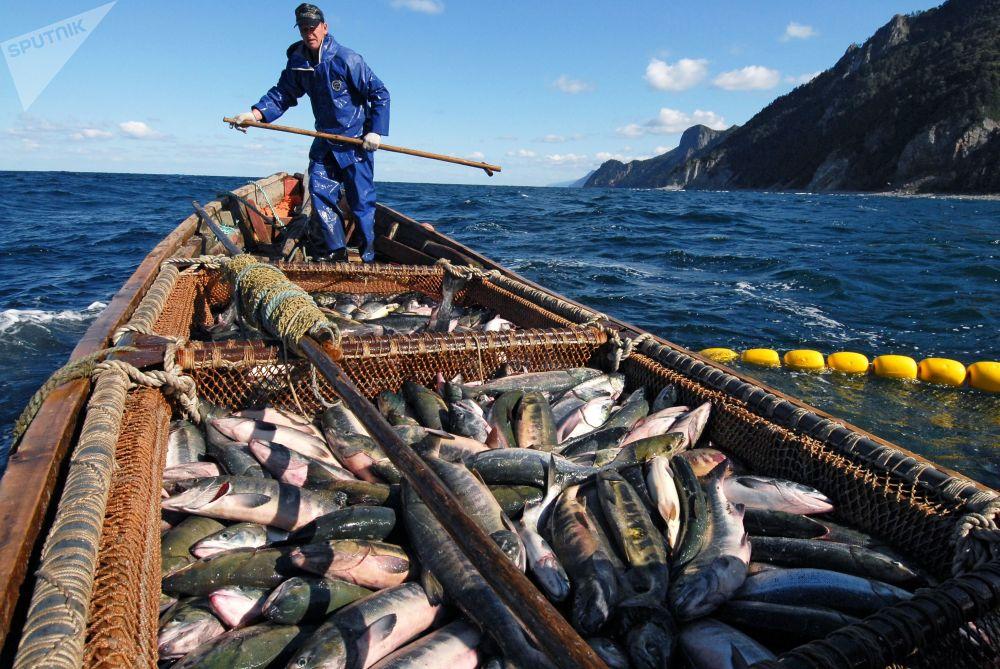 Połów łososiaw Morzu Ochockim