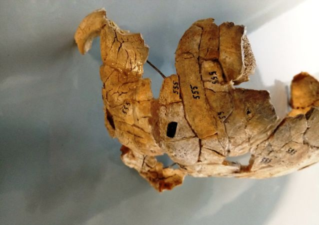 Rozbita i przepalona czaszka znaleziona pół wieku temu w czasie prac wykopaliskowych na brzegu Narwi w północno-wschodniej Polsce