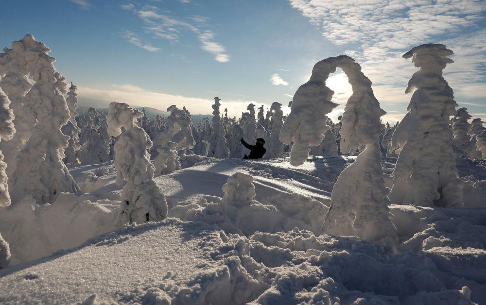 Mężczyzna robi sobie selfie między pokrytymi śniegiem drzewami w Szczyrku, Polska