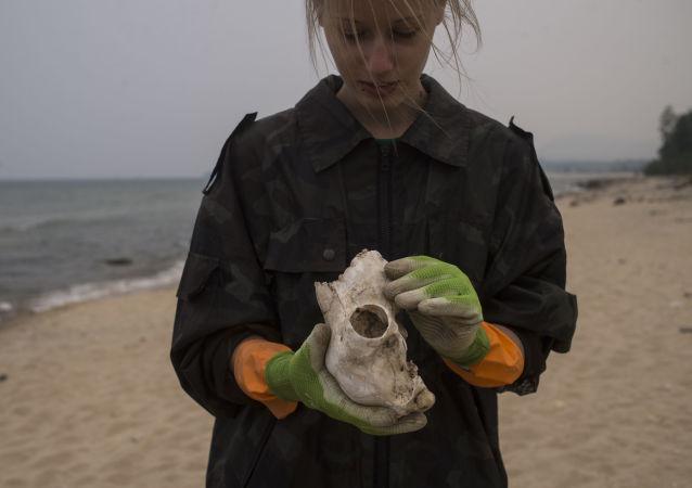Wolontariusze zbierają śmieci na brzegu jeziora Bajkał