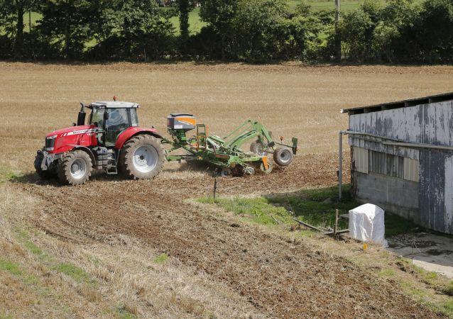 Francuskie gospodarstwo rolne przed zbiorem plonów