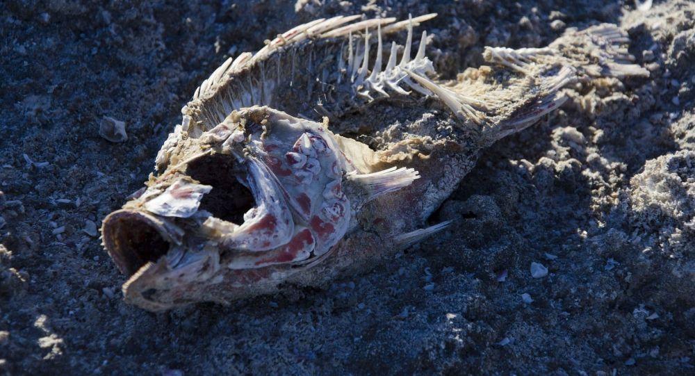 Szkielet ryb na piasku