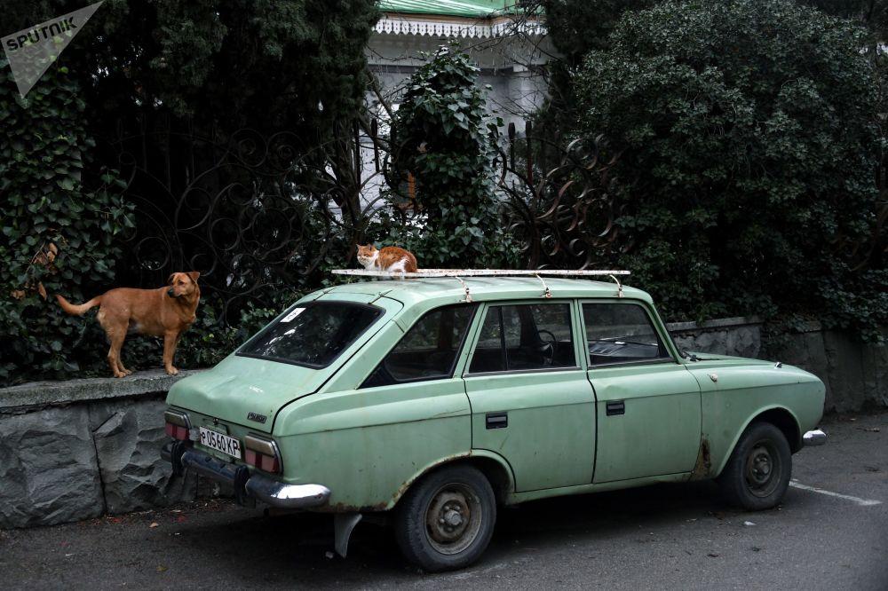 Pies, kot i samochód IŻ-2125 Kombi
