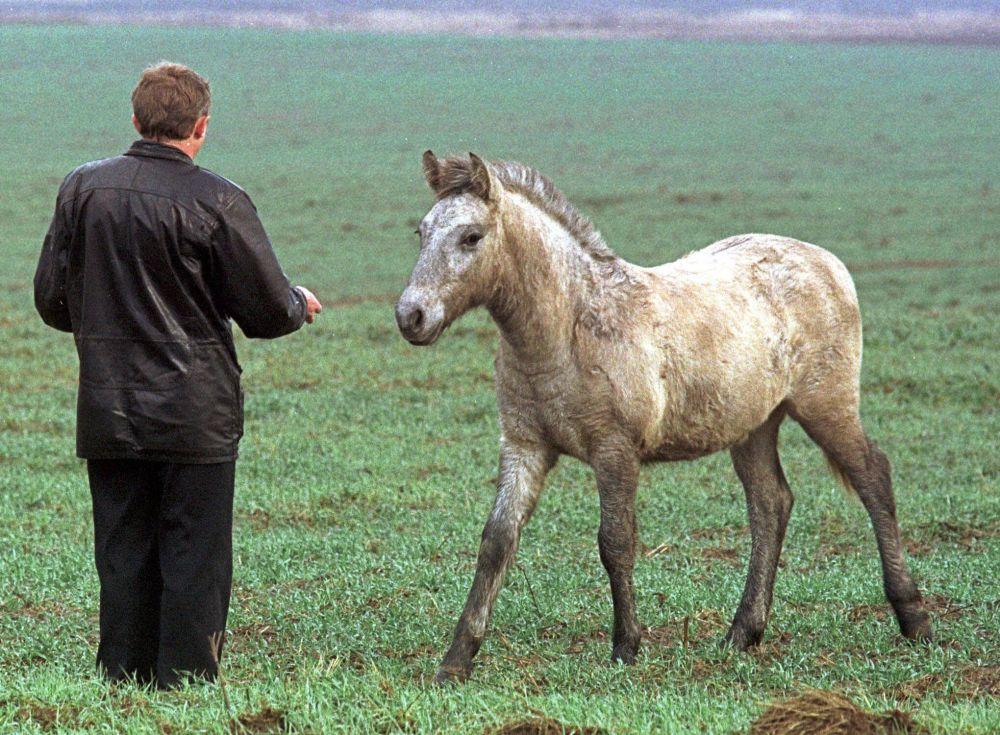 Koń w strefie wykluczenia wokół Czarnobyla. Listopad 2000 r.