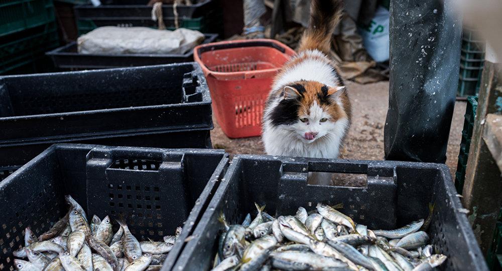 Polityka handlowa prezydenta USA Donalda Trumpa doprowadziła do tego, że amerykańskich producentów ryb wypierają rosyjscy