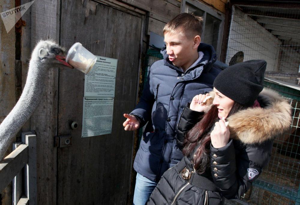 Para karmi strusia w ogrodzie zoologicznym we Władywostoku