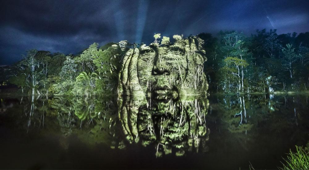 Portret na drzewach w Nizinie Amazonki